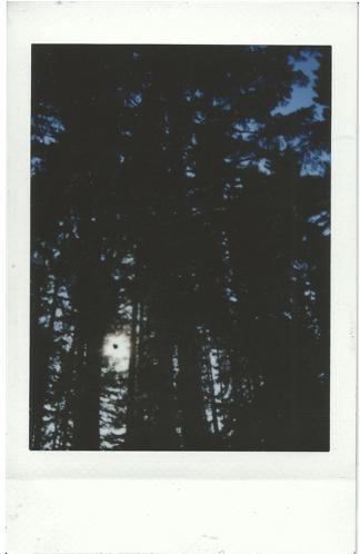 StringSummitTrees